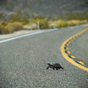 turtleintheroad