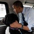 Bo and President Obama
