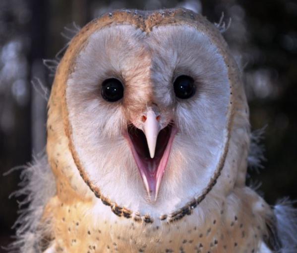 cute owl baby