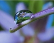 reflection in dewdrop