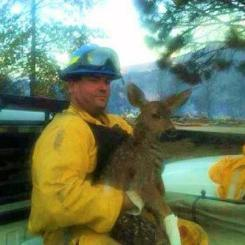 Firefighter rescues deer from Waldo Canyon fire near Colorado Springs
