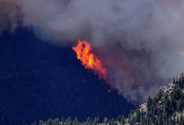 forest fire on steep slope