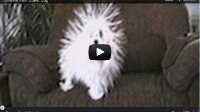 dandelion dog