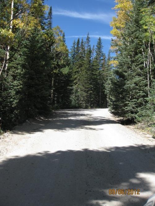 Trees hug the road