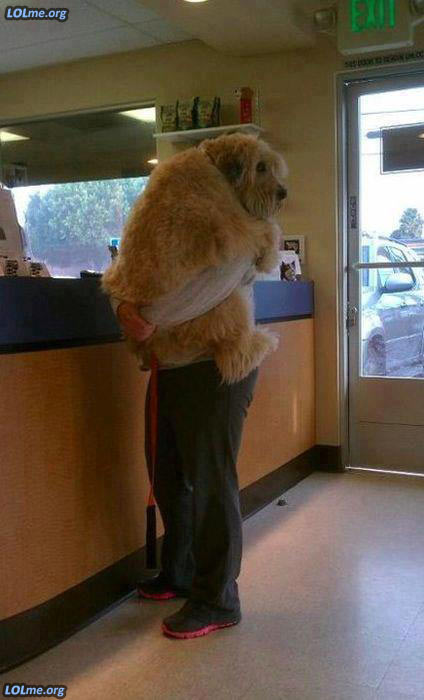 Scared dog at vet's office