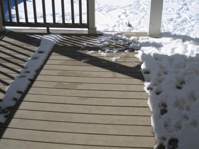 sun eats snow