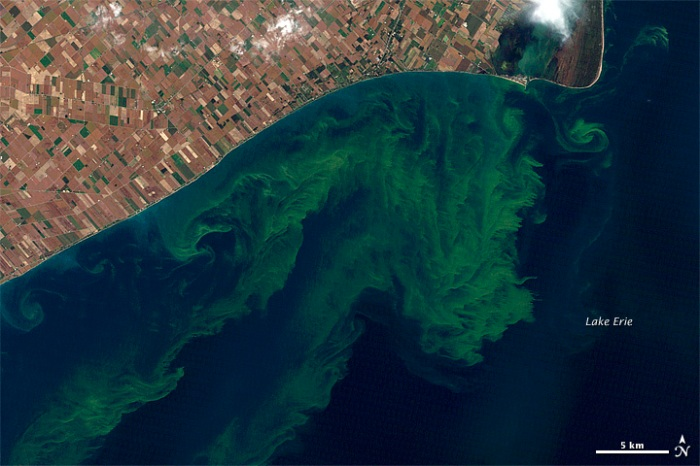 Lake Erie algae bloom, 2011 (Photo: NASA Earth Observatory)
