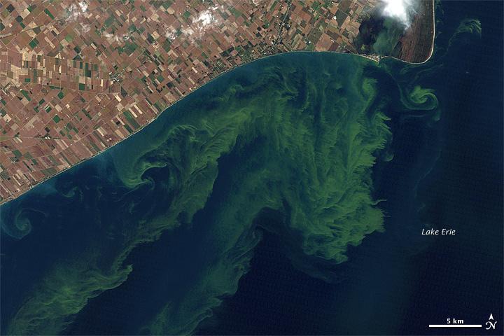 Lake Erie algae bloom, 2011 (Photo: NASA Earth Observatory)