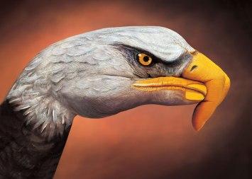 GuidoDaniele-bald-eagle-on-brown