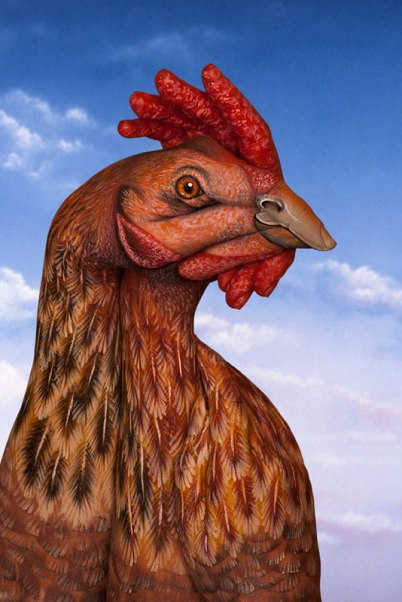 GuidoDaniele-chicken