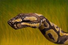 GuidoDaniele-python