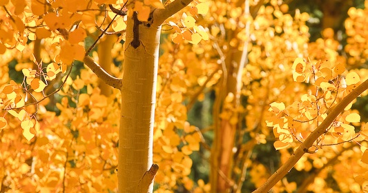 """""""Dressed in Gold"""" by Erik Stensland. Shot in Rocky Mountain National Park's Glacier Gorge, Sept. 23, 2008. Photo used by permission."""