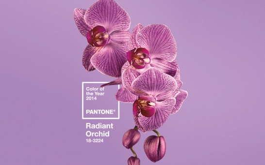 Radiant Orchid, Pantone's Color of the Year for 2014