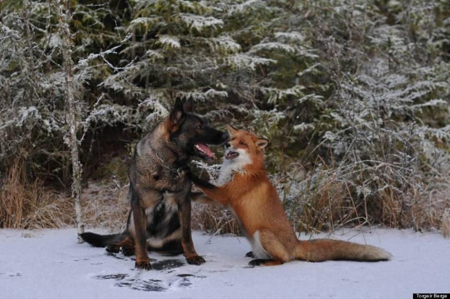 Foxandhound2