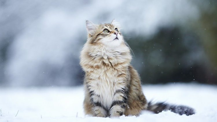 catlookingatsnow