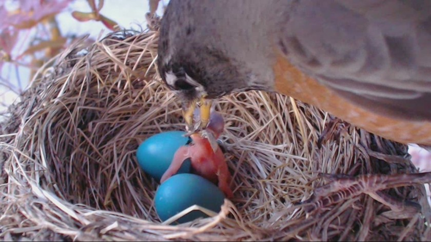 """""""Chick One - First Feeding"""""""