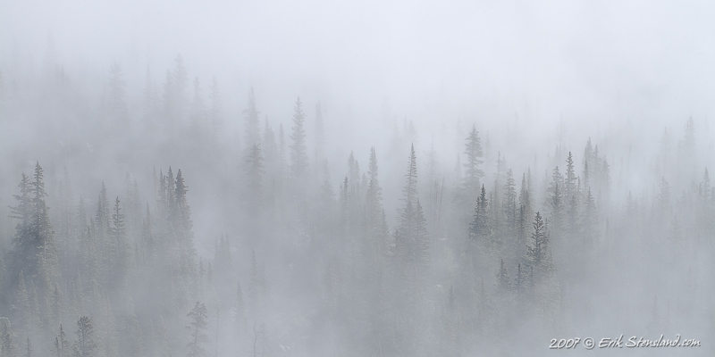 I was on the eastern slope of Mount Orton in Wild Basin after a morning of rain and thick fog. The fog began to part revealing a beautiful and almost magical forest amongst the clouds.