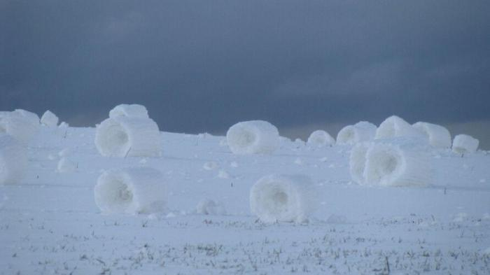 Snow rollers up to 2 feet tall cover a field near Craigmont, Idaho on Mar. 31, 2009. (Photo credit: Tim Tevebaugh via NWS-Spokane)