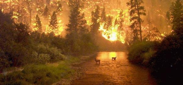 Alaskan Type I Incident Management Team. Photographer: John McColgan, Bureau of Land Management, Alaska Fire Service