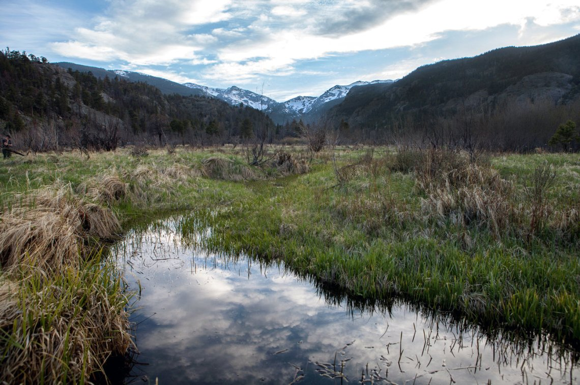 Moraine Park, Rocky Mountain National Park. (Photo: Wes Lindamood/NPR)