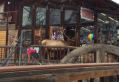 Bull elk enters Estes Park gift shop