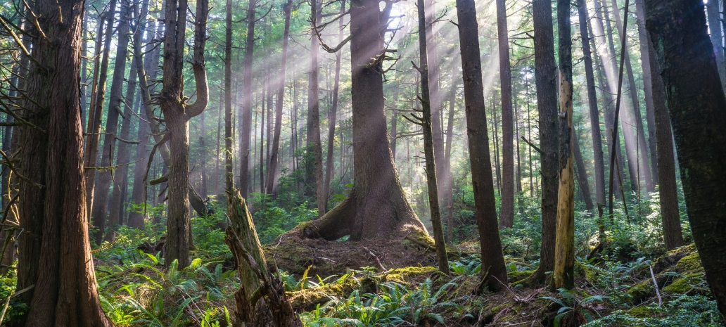 Olympic National Park, National Park Service