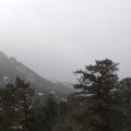 Screen Shot 2020-12-19 at 1.49.51PM
