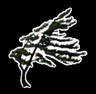 windwhistlelogo_trans