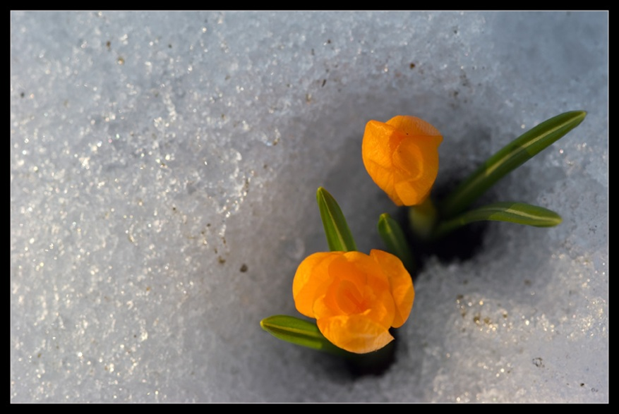Spring has sprung. Wish we'd gotten some snow along with our flowers.