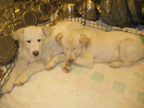 Larry and Itamar, Feb. 20, 2009