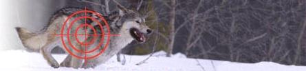 wolf-banner